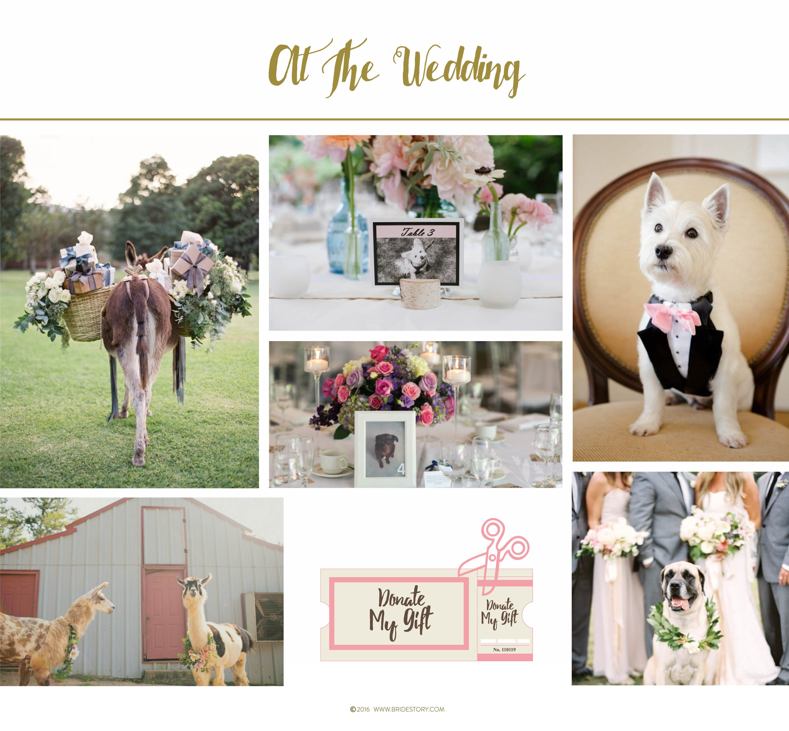 How to Involve Pets in Your Wedding Image 2