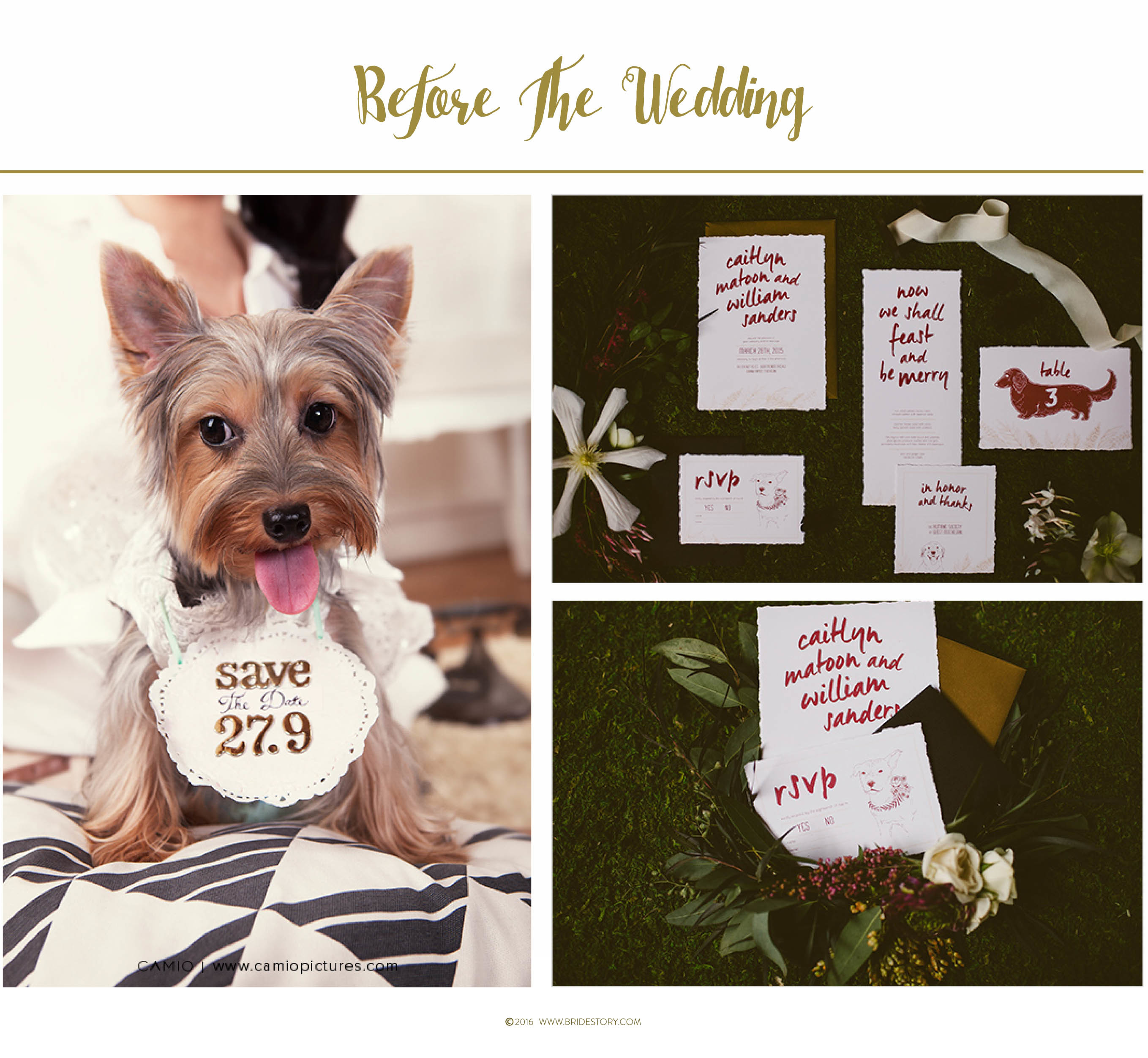 How to Involve Pets in Your Wedding Image 1