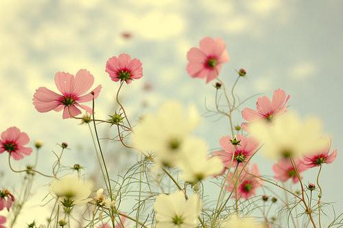 landscape photography flowers. landscape photography flowers d