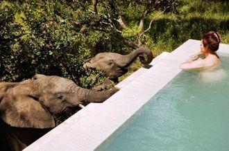safari_-_via_forbes_tvz5nv.jpg